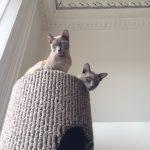 Barty and Basil