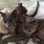 Barty, Basil and Lola