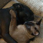 Twiglet and Stimpy